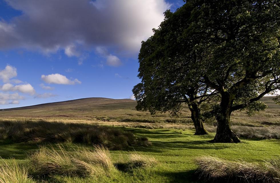 Self Guided Walking Wicklow Ireland